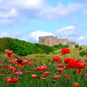 Poppies at Bamburgh Castle by Paul Stevenson - Landscapes Travel ( blue sky, bamburgh, summer, castle, poppies, historical, flowers )