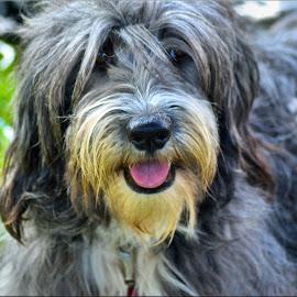 dog by Nic Scott - Animals - Dogs Portraits ( dog,  )