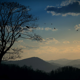 Crows over Frakes, Ky by Paul Mays - Landscapes Mountains & Hills