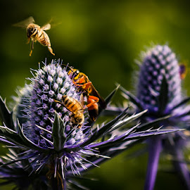 Traffic Jam by Chris Martin - Nature Up Close Other Natural Objects ( bees, nature, bee, flowers )
