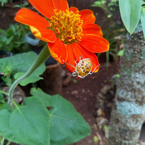 A bug and a flower by Adoracion Bautista - Flowers Single Flower ( bug, insects, flower,  )