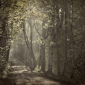 Forest Secrets by Dalia Račkauskaitė - Landscapes Forests ( forest, road, morning, light )