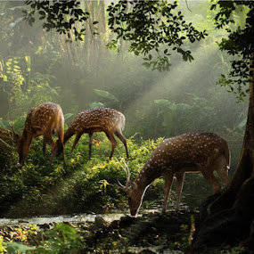 deer land by Budi Cc-line - Animals Other Mammals