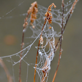 by Kim Rogge - Nature Up Close Webs