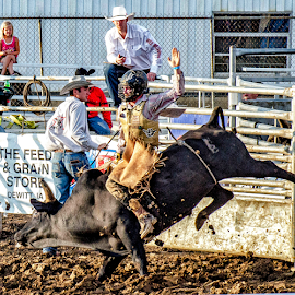 by Theresa Stevens - Sports & Fitness Rodeo/Bull Riding ( cowboy, horn, bucki, bounce, dirt, bull, ride )