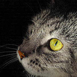 *** by Jurijs Ratanins - Animals - Cats Portraits ( cat, portrait, animal )