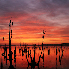 Sunrise by Roger Becker - Landscapes Waterscapes ( water, nature, sunset, sunrise )