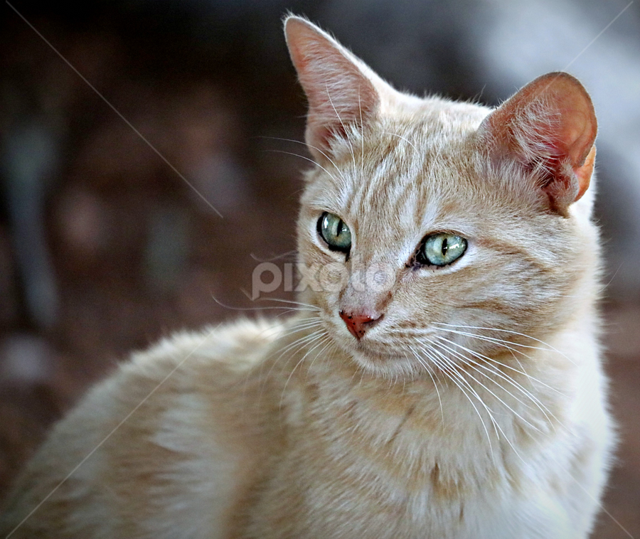 Mother by Pieter J de Villiers - Animals - Cats Portraits