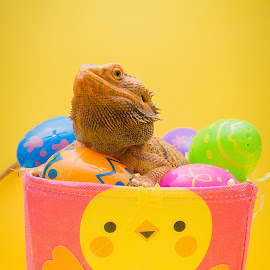 Easter Dragon by Lou Olarte - Public Holidays Easter ( easter, jesus, pink, easter eggs, yellow, reptile, bearded dragon, lizards, easter basket )