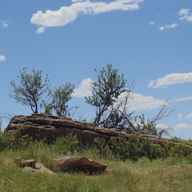 Rocky Trees by SHARON ARMIJO - Nature Up Close Rock & Stone ( grasses, nature, trees, rock, prairie )