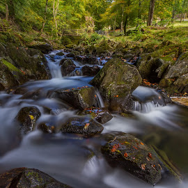 Rydal beck , Cumbria by Stephen Smallwood - Landscapes Travel