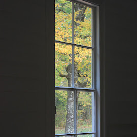 Autumn through schoolhouse window by Larry Smith - Buildings & Architecture Other Interior ( schoolhouse, tree, window, color, autumn )