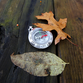 by Dipali S - Artistic Objects Other Objects ( adventure, technology, map, compass )
