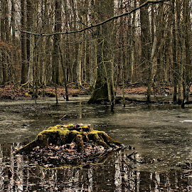by Dubravko Butković - Landscapes Forests