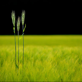 Three of a kind by Blaž Ocvirk - Nature Up Close Leaves & Grasses