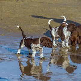 by Martin Hurwitz - Animals - Dogs Puppies