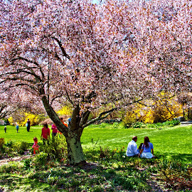 Sunny Day in Park by Don Webb - City,  Street & Park  City Parks ( cherry, blooom, tree, park, couple, people, blossom )