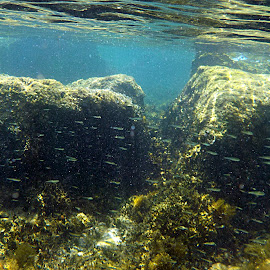 sea of Porec by Patrizia Emiliani - Landscapes Underwater ( croatia, summer, sea, porec )