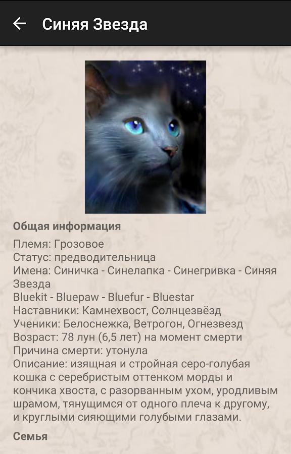 Коты воители — ТОП КНИГ