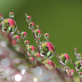 noting change by Lala Fuad - Nature Up Close Natural Waterdrops