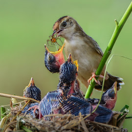 Let's Eat Baby, Eat! by Leovin Agustim - Animals Birds ( birds, bird photography, animal )