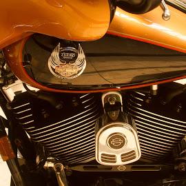 Harley Davidson by John Guest - Transportation Motorcycles ( harley davidson, copper, bartlesville ok, motorcycle, summer )