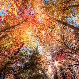 by Dragan Milovanovic - Nature Up Close Trees & Bushes