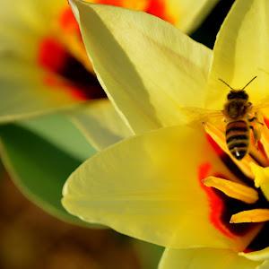 3-31-15 flower spring bee 4.jpg