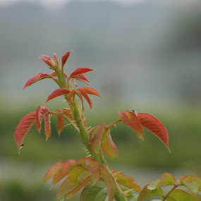 by Mehul Singh - Nature Up Close Leaves & Grasses (  )