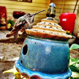 Humming bird rests on house by Grace Grantham - Instagram & Mobile iPhone ( little house, hummingbird )