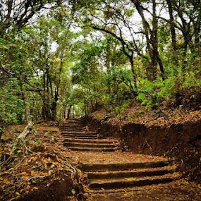 Carved out Steps by Akash Kumar - Novices Only Landscapes ( ooty )
