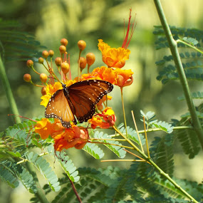 Flutter By by Donna Probasco - Novices Only Wildlife (  )