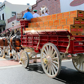 Budweiser clydesdales & wagon by Robert Thompson - Transportation Other ( budweiser, horses, vintage, wagon, clydesdales )