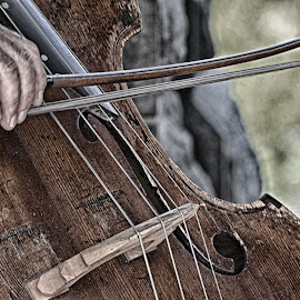 Cello In The Park  by Lorraine D.  Heaney - Artistic Objects Musical Instruments