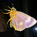 Bengal Harisa Orange Awlet