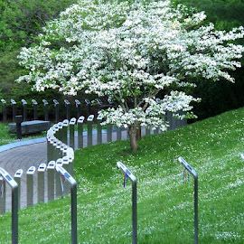 War Memorial Walkway 1 by RMC Rochester - City,  Street & Park  City Parks ( flowers, nature, objects, abstract, trees, landscape, park,  )