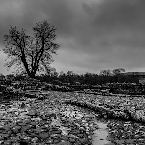 Lone tree  by John Haswell - Black & White Landscapes ( clouds, sky, b&w, tree, black and white, rocks,  )