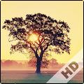 Free Serene Wallpaper APK for Windows 8