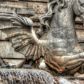 The horse and the seagull by John O'Groats - Buildings & Architecture Statues & Monuments ( roma, trevi, seagull, italia, rome, fontana di trevi, horse, fountain, italy )