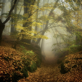 Forest 2 by Petr Homola - Landscapes Forests