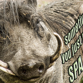 Spa Day by Sheen Deis - Typography Captioned Photos ( animals, wart hog, humor, spa )