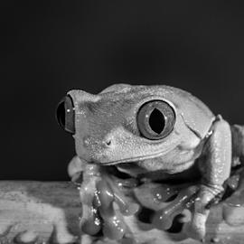 Frog by Garry Chisholm - Black & White Animals ( macro, frog, nature, amohibian, garry chisholm )