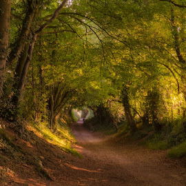 Footpath to Windmill by Bela Paszti - Landscapes Forests ( nikon, eu, sussex, forest, nature, uk, tree, hike, landscape, walk, footpath )