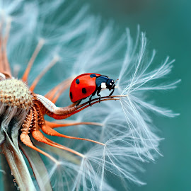 Good Bye .. by Mustafa Öztürk - Animals Insects & Spiders ( macro, ladybug, insect, close up, animal, sea creatures, underwater life, ocean life )