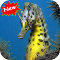 Download Seahorse APK for Laptop