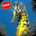 App Seahorse version 2015 APK