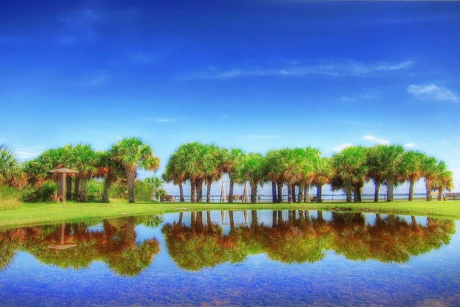 Honeymoon Island. Dunedin, Florida. by Edward Allen - Landscapes Waterscapes