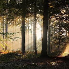 Woodland SunLight by Ceri Jones - Landscapes Forests