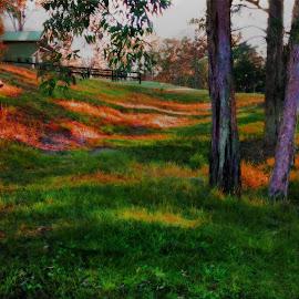 Morning Light by Cheryl Hesketh - Instagram & Mobile Android ( morning light, australia, forest, boat, country )