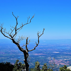 Dead tree on a landscape view by Svetlana Saenkova - Landscapes Travel ( pyrenees, panorama,  )